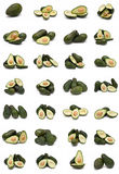 Avocados collection. Royalty Free Stock Photography