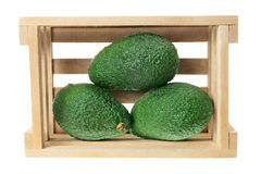 Avocados in Crate Stock Image