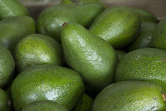 Avocados on Display Royalty Free Stock Photography