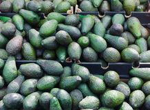Avocados on display at market Stock Photography