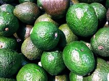 Avocados. Fresh avocados in supermarket. This fruit is prized for its high nutrient value and is added to various dishes due to its good flavor and rich texture stock photography