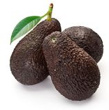 Avocados with leaves Stock Image