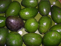 Avocados with a lonesome riped one Royalty Free Stock Photography