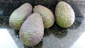 Avocados na białym tle obraz stock