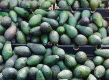 Avocados na pokazie przy rynkiem Fotografia Stock