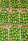 Avocados on street market stall Royalty Free Stock Image