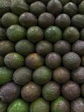 Vertical Avocado Wall Stock Photography