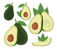 Avocadosatz Karikaturvektorikone lokalisiert auf weißem Hintergrund Lizenzfreie Stockbilder