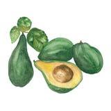 Avocadostücke eingestellt lokalisiert Stockbild