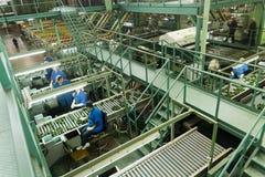 Avocadoverpakkingsbedrijf Stock Foto