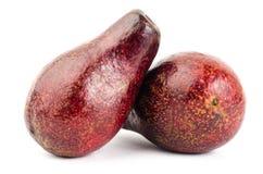 Avocat frais Image stock