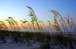 Avoine de mer au lever de soleil Photos stock