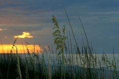 Avoine de mer au lever de soleil en Floride photos stock