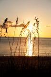 Avoine de mer avec le coucher du soleil image libre de droits