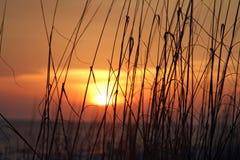 Avoine de mer dans le coucher du soleil Photographie stock