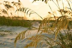 Avoine de mer protégeant des dunes au lever de soleil Photo stock