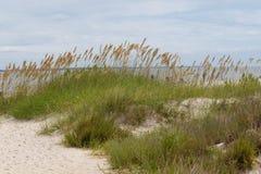 Avoine et herbe de mer sur la dune de sable près de l'eau photographie stock libre de droits