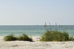 Avoine et herbe de mer sur une dune de sable Photos stock
