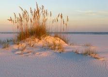 Avoine, sable et coucher du soleil de mer sur la côte de Golfe Image libre de droits