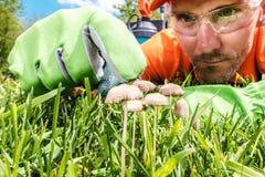 Avoir affaire avec le champignon de pelouse images stock