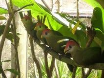 Avoir un point de vue d'oeil d'oiseaux Photographie stock