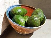 Avokadon i solen royaltyfri fotografi