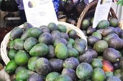 Avokadon på en amerikansk bondes marknad Royaltyfri Bild