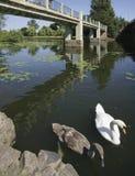 avon flod arkivfoto