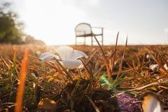 Avond het lichte glanzen door de overzeese gras uitstekende beelden Royalty-vrije Stock Fotografie