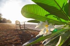 Avond het lichte glanzen door de overzeese gras uitstekende beelden Stock Foto