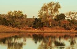 Avondlandschap over water in Afrika Stock Foto's