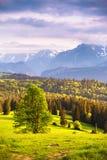 Avondlicht in de lente Zonsondergang in Tatra-Bergen, Polen Stock Afbeelding