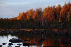 Avondlicht in Treholmen in Vasterbotten, Zweden stock foto's