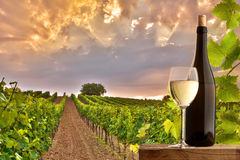 Avondmening van de wijngaarden Stock Foto