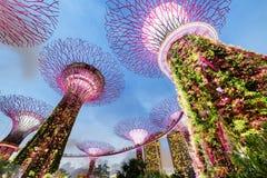 Avondmening van het Supertree-Bosje met Skyway, Singapore royalty-vrije stock fotografie