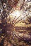 Avondzon door bomen stock fotografie