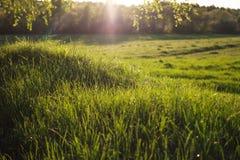 Avondzon op het gras stock fotografie