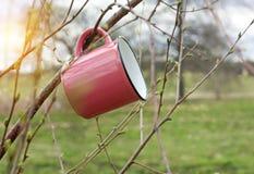Avonturen in de wildernis De reismok hangt op boomtak in de lente zonnige dag, royalty-vrije stock afbeeldingen