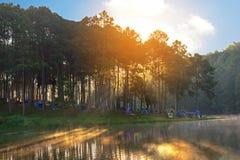 Avonturen het Kamperen en tent onder het pijnboombos dichtbij water openlucht in ochtend royalty-vrije stock foto's