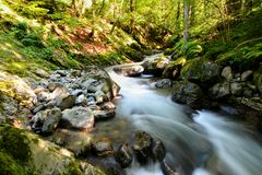 Avrig river. Flowing, Romania Royalty Free Stock Photography