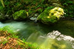 Avrig river through forest. Avrig river flowing through forest stones, Romania Stock Image