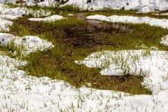 27 avril 2017 - MESA de HASTINGS près de RIDGWAY ET de TELLURURE LE COLORADO - hiver dans le ressort - tard Saisons, forêt Image stock
