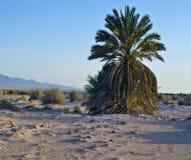 Avrona Negev的自然保护沙漠,以色列 免版税库存图片