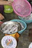 Avskärma den till salu fisken Arkivbilder