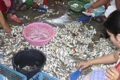 Avskärma den till salu fisken Royaltyfria Foton