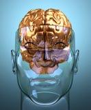 avskild glass head human för hjärna Arkivbild