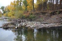 Avskräde i floden Royaltyfri Foto