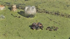 avskräde i sjön stock video