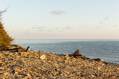 Avskräde och avfalls på stranden Fotografering för Bildbyråer