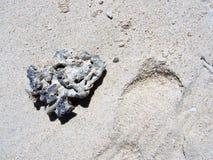 Avskräde på på den vita stranden för sander s Royaltyfri Foto
